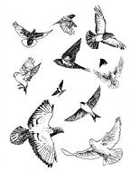 http://www.eduardolopezlopez.com/files/gimgs/th-23_aves.jpg